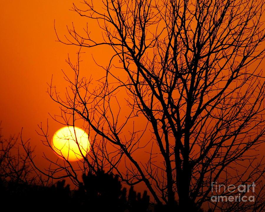 Sunshine Photograph - Orange Glow by Lynn Reid