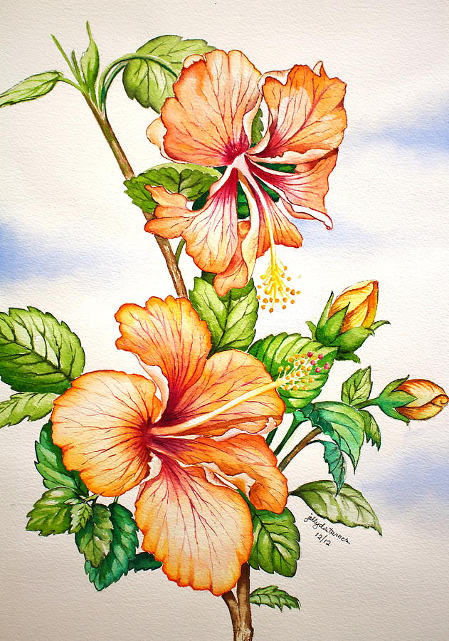 Orange Hibiscus Flower Painting By Jelly Starnes