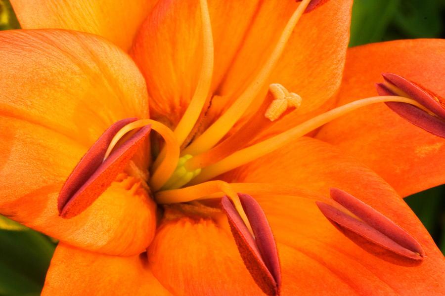 Orange Photograph - Orange II by Amanda Kiplinger