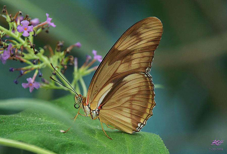 Butterfly Photograph - Orange Julia by Kenneth Hadlock