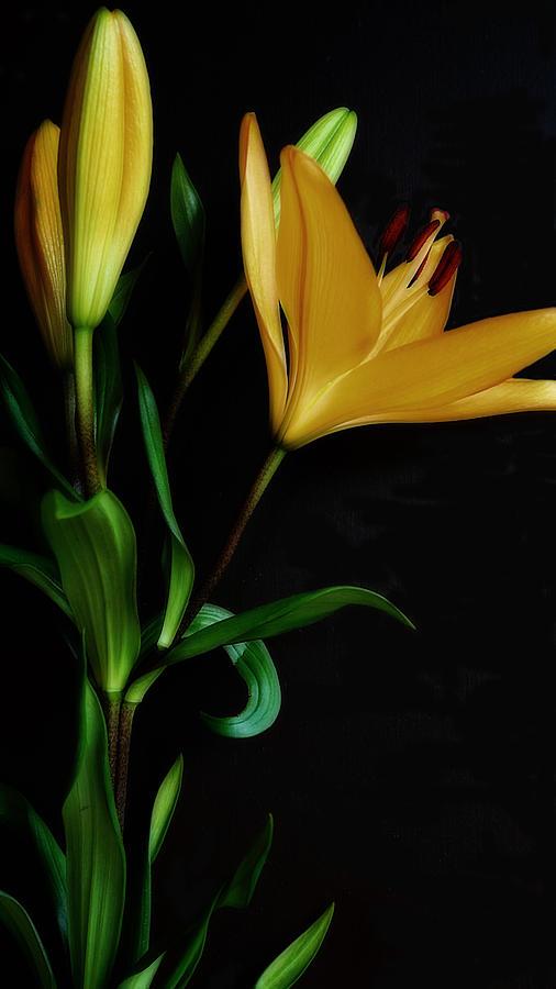 Orange Lily One by Beth Akerman