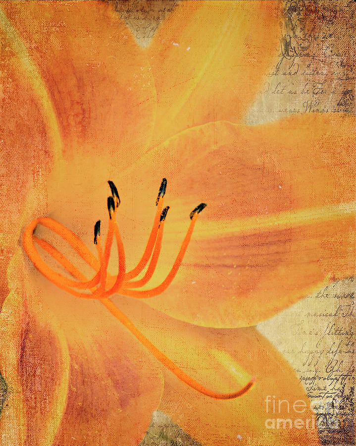 Orange Lily by Pam  Holdsworth