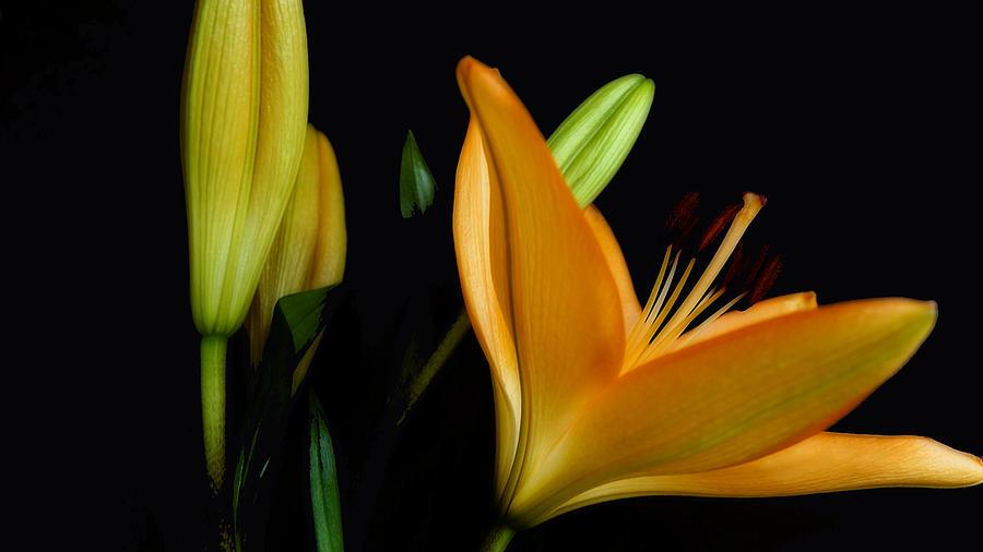 Orange Lily Three by Beth Akerman