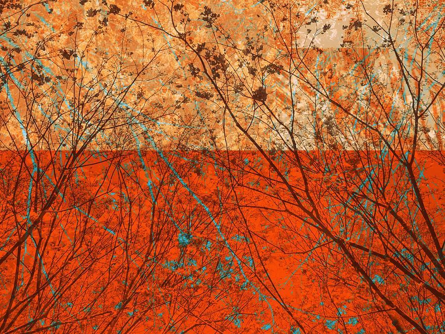 Orange Meditation by Andy Rhodes