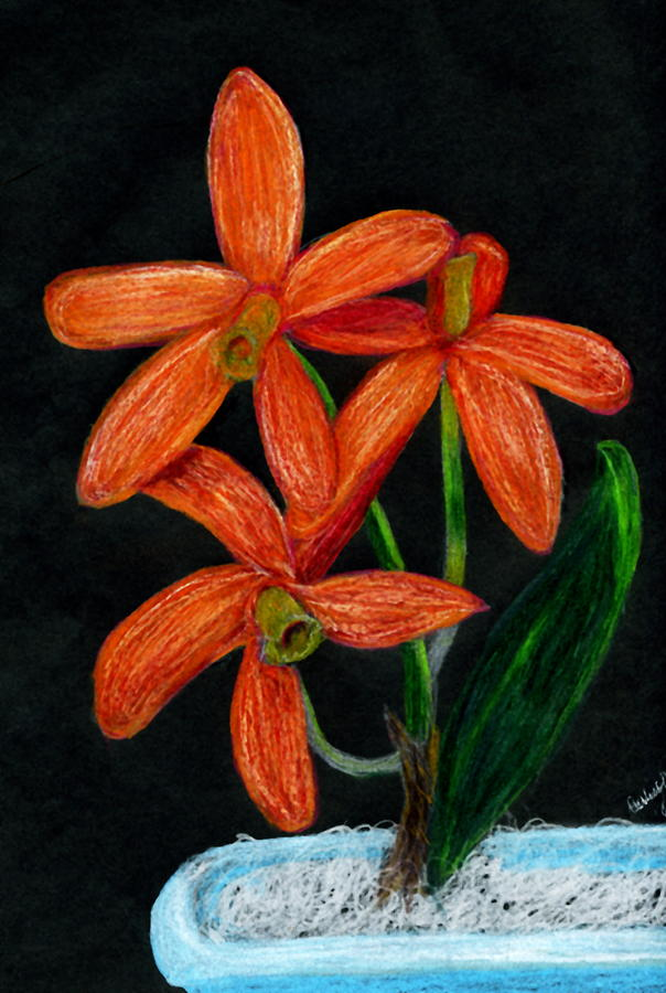 Orange Orchid In A Blue Pot Drawing by Carliss Mora