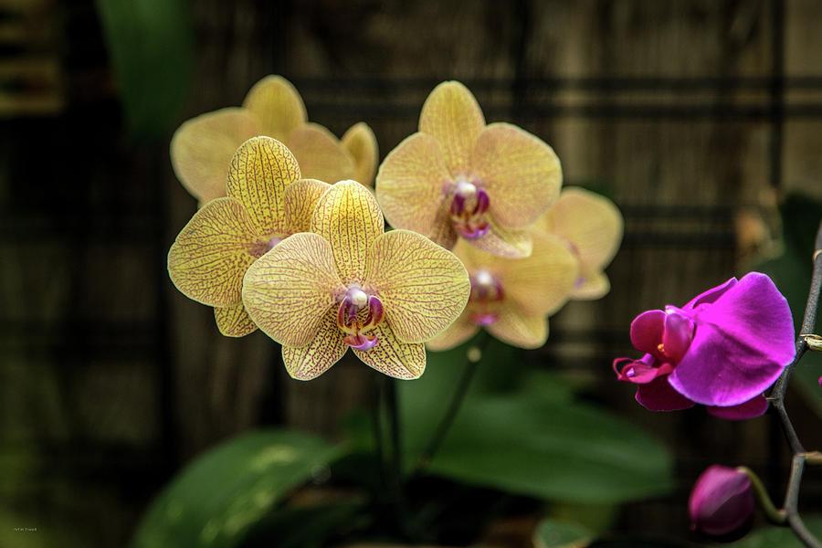 Allan Photograph - Orange Orchids by Ross Henton