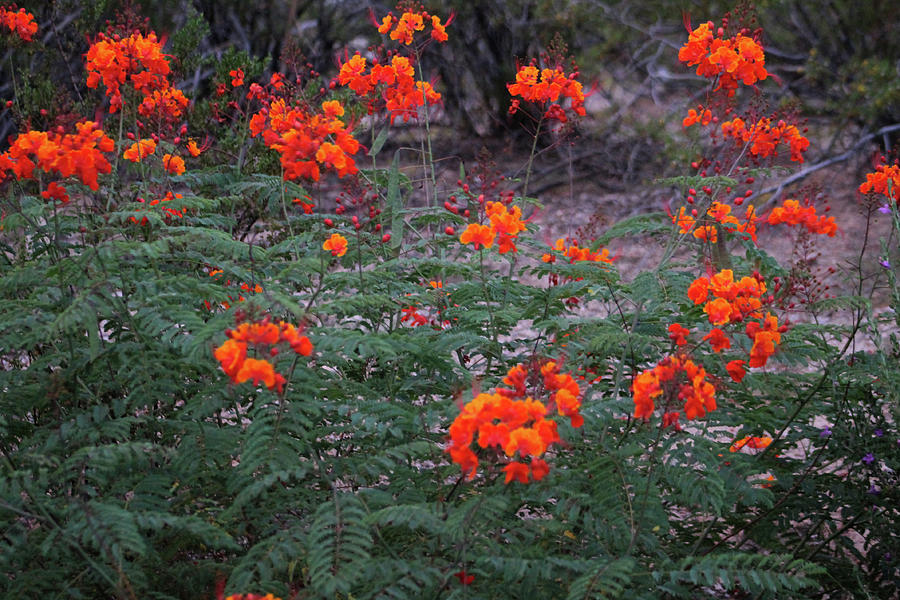 Orange Paradise Photograph