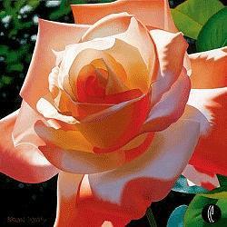 Rose Painting - Orange Radiance by Brian Davis