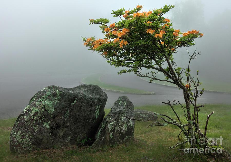 North Carolina Photograph - Orange Rhododendron In The Blue Ridge by Dan Carmichael