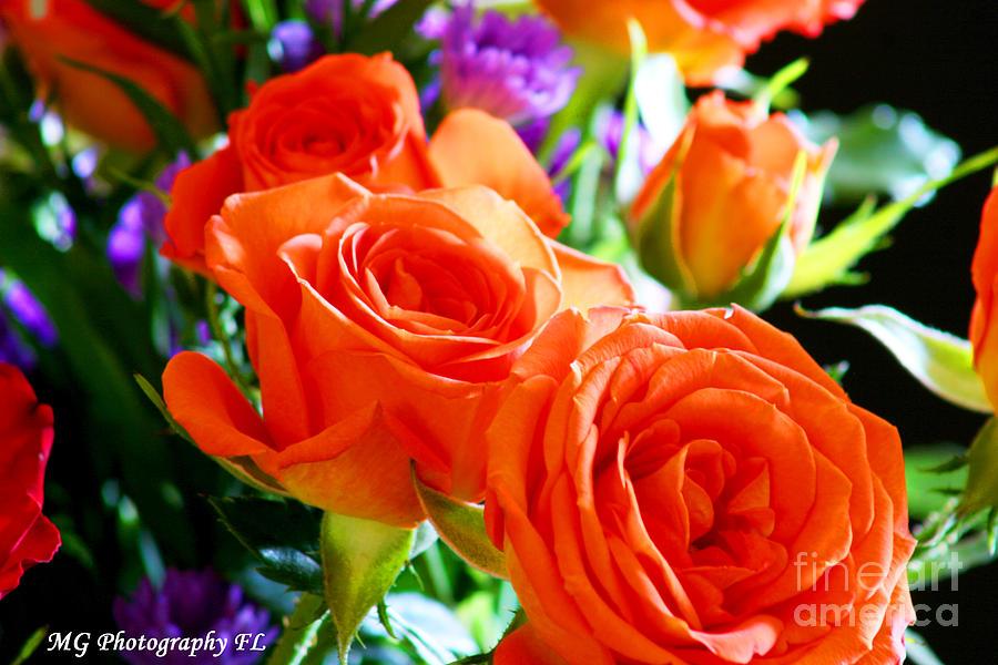 Rose Photograph - Orange Rose by Marty Gayler