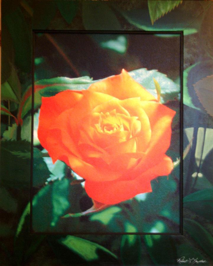Orange Rose Mixed Media - Orange Rose by Robert Boynton