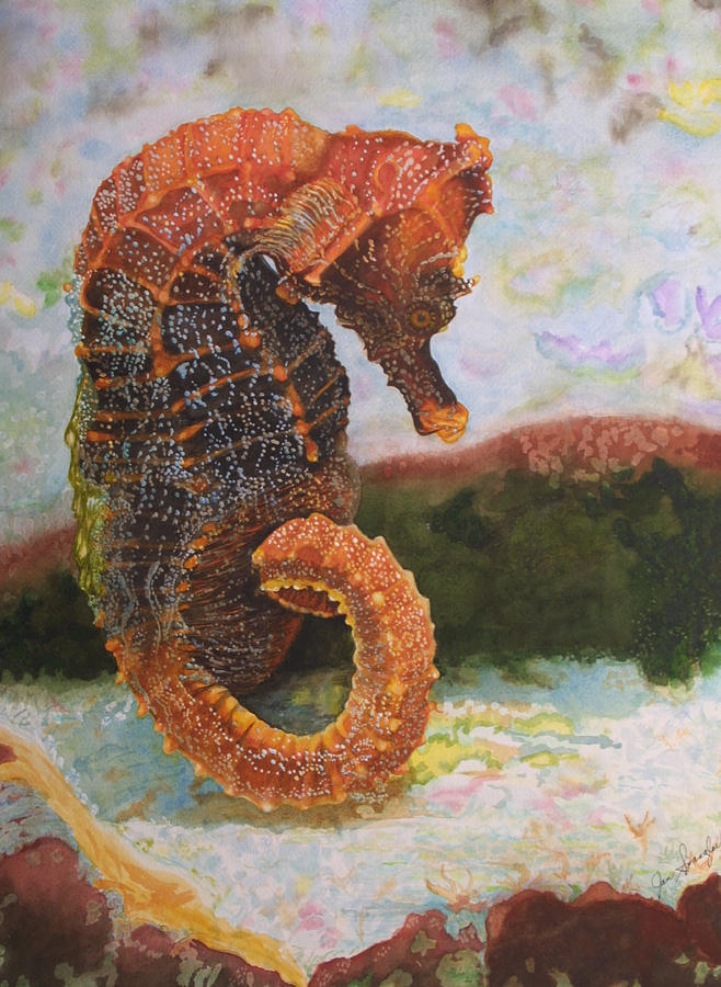 Watercolor Painting - Orange Sea Horse At Rest. by Jan  Spangler