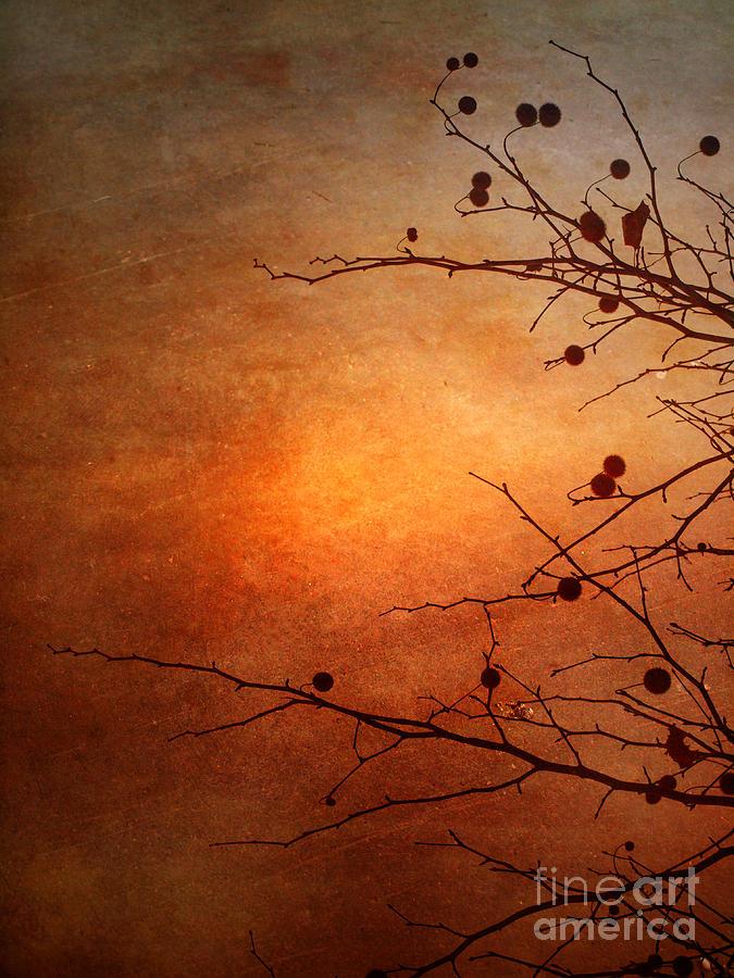 Orange Photograph - Orange Simplicity by Tara Turner