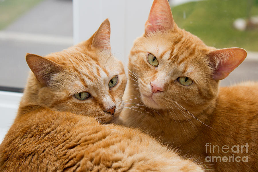 Orange tabby cat names male