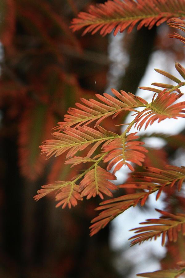 Fall Photograph - Orange Tinted Glow by Amanda Wimsatt