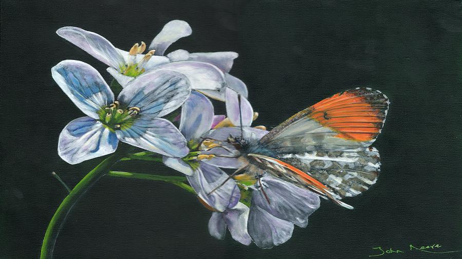 Orange Tip  by John Neeve