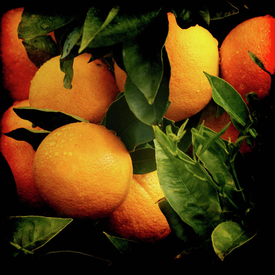 Oranges Photograph - Oranges by Ernie Echols