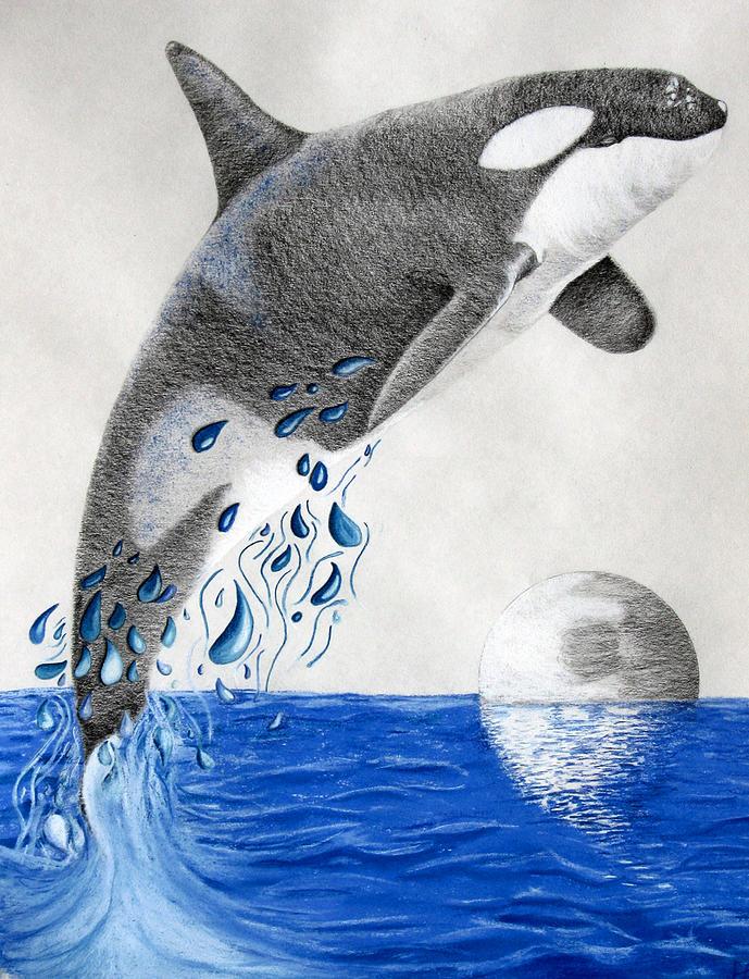Orca Drawing by Mayhem Mediums