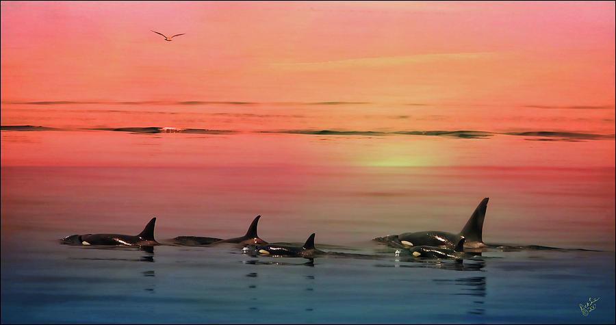 Photograph Digital Art - Orca Sunset by Rick Lawler