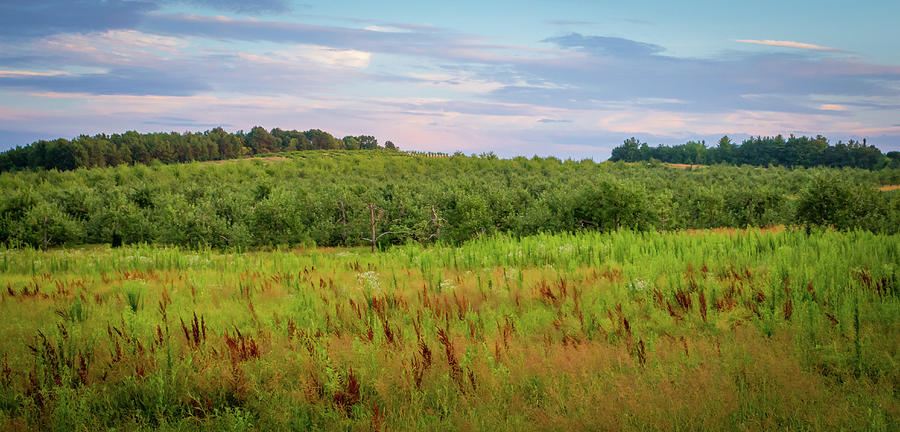 Orchard Photograph - Orchard Hills by Debbie Gracy