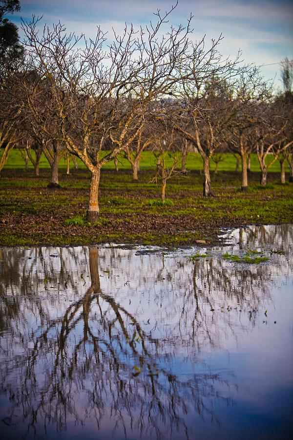 Orchard Photograph - Orchard IIi by Derek Selander