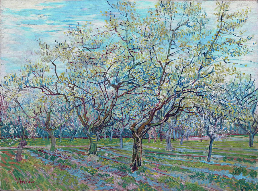 Plum Painting - Orchard With Blossoming Plum Trees   by Vincent Van Gogh