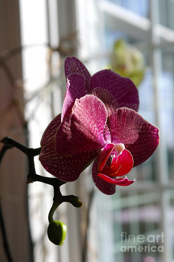 Orchid Photograph - Orchid - 102 by David Bearden