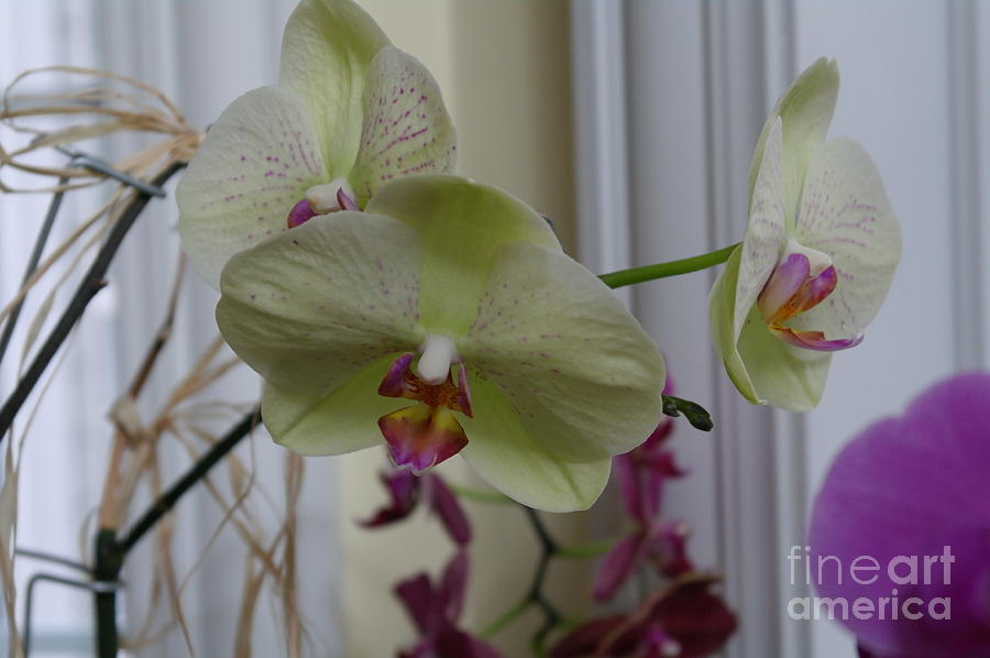 Orchid Photograph - Orchid - 103 by David Bearden