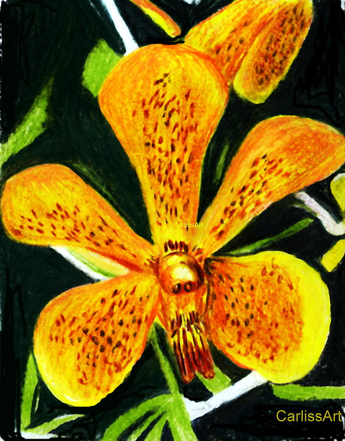 Orchid 1 Print by Carliss Mora