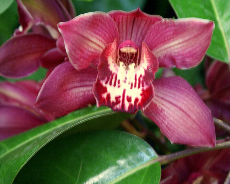 Flower Photograph - Orchid 10 by Marty Koch