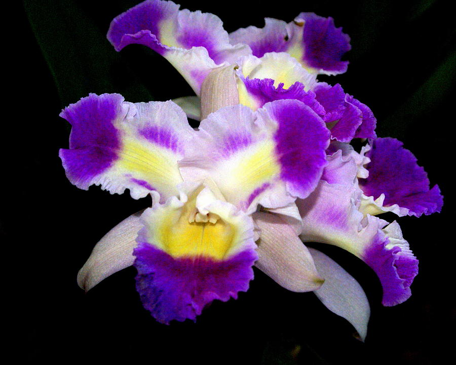 Flower Photograph - Orchid 13 by Marty Koch