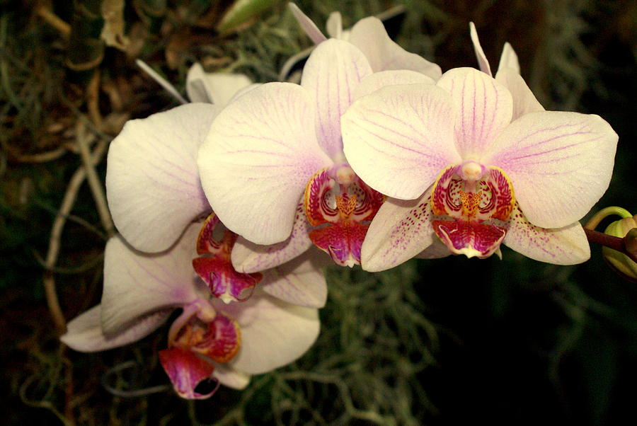 Flower Photograph - Orchid 19 by Marty Koch
