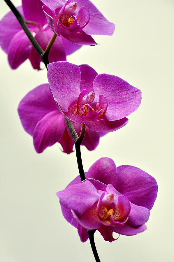 Orchid Photograph - Orchid 26 by Marty Koch
