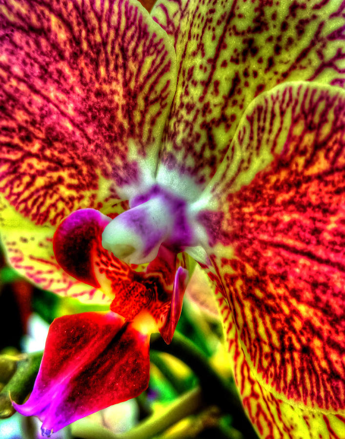 Orchid 346 Photograph