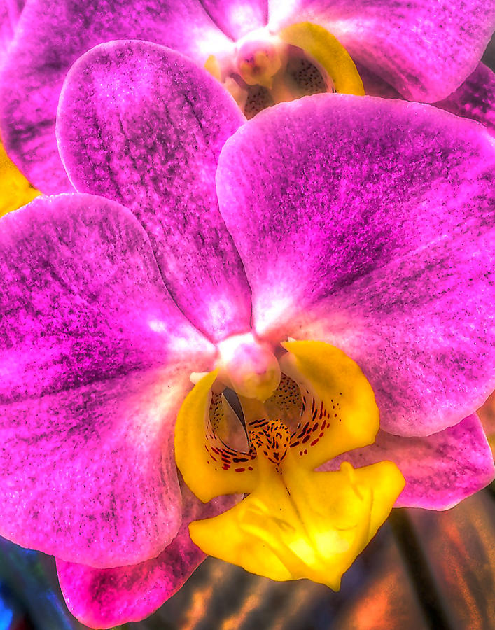 Orchid 347 Photograph