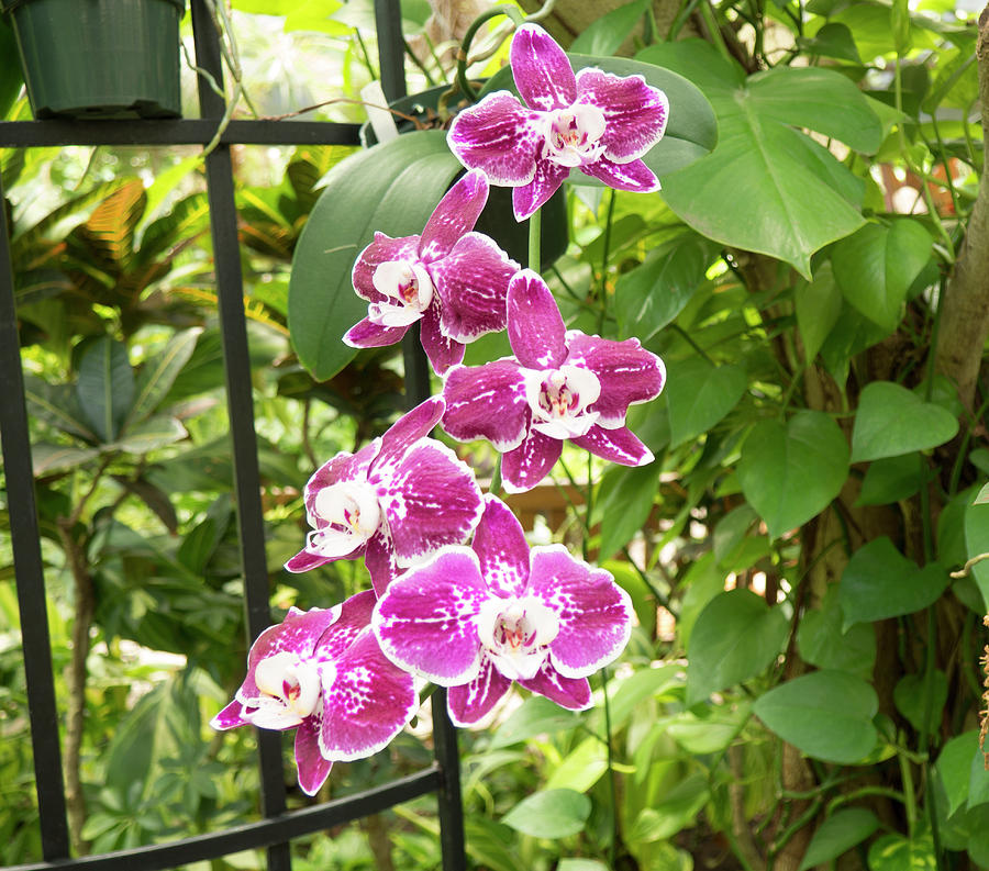 Orchid Photograph - Orchid #4 by Michael Colgate