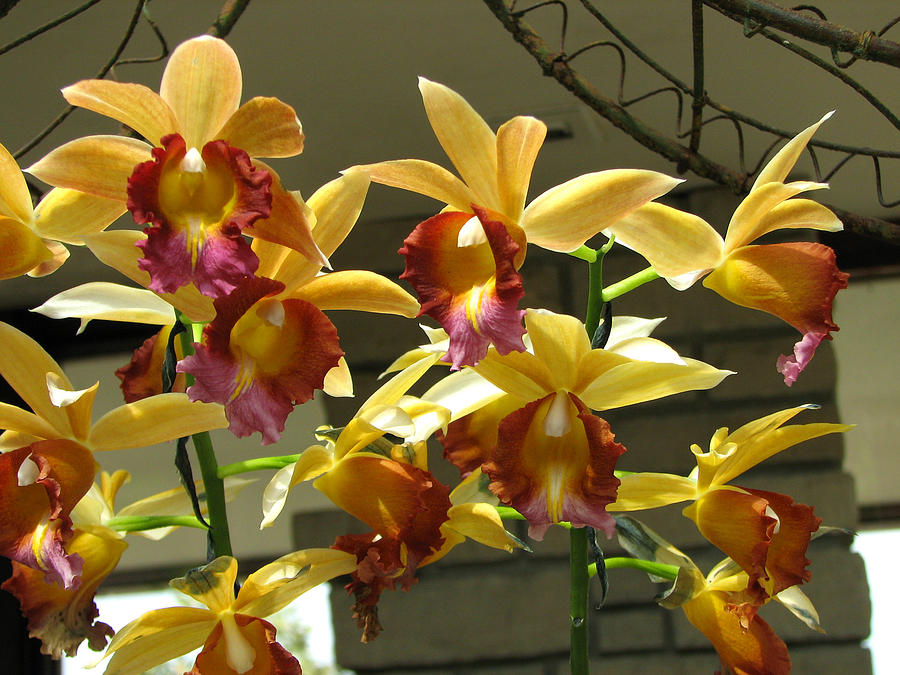 Orchid Photograph - Orchid 5 by David Dunham
