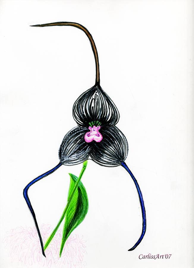 Orchid 6 Drawing by Carliss Mora