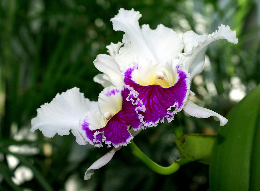Flower Photograph - Orchid 6 by Marty Koch