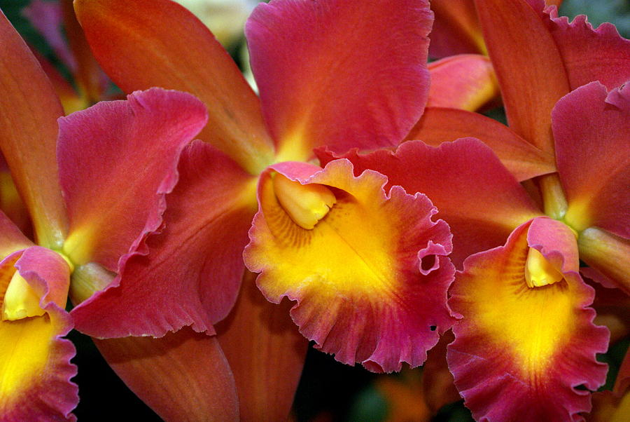 Flower Photograph - Orchid 8 by Marty Koch