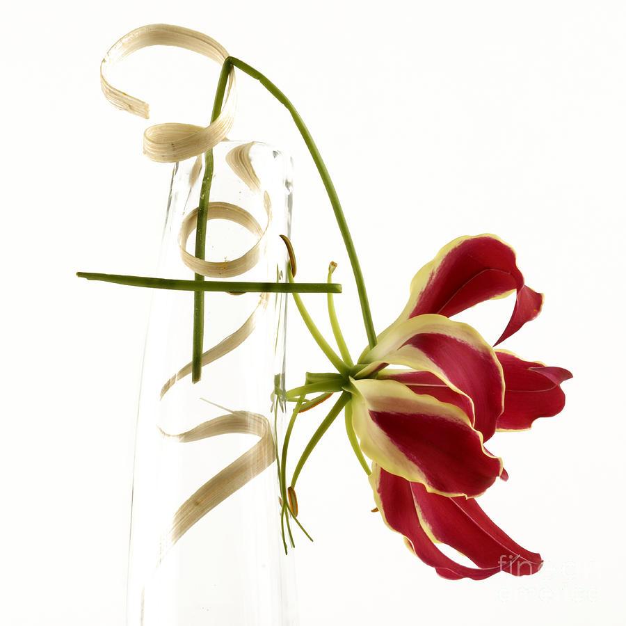 Bloom Photograph - Orchid by Bernard Jaubert