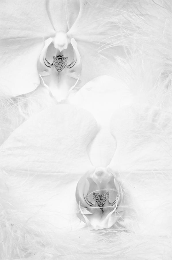 White Photograph - Orchid Duo Painted by Jan Hagan