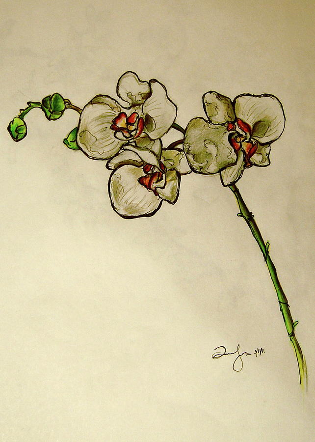 Orchid Drawing By Emily Jones