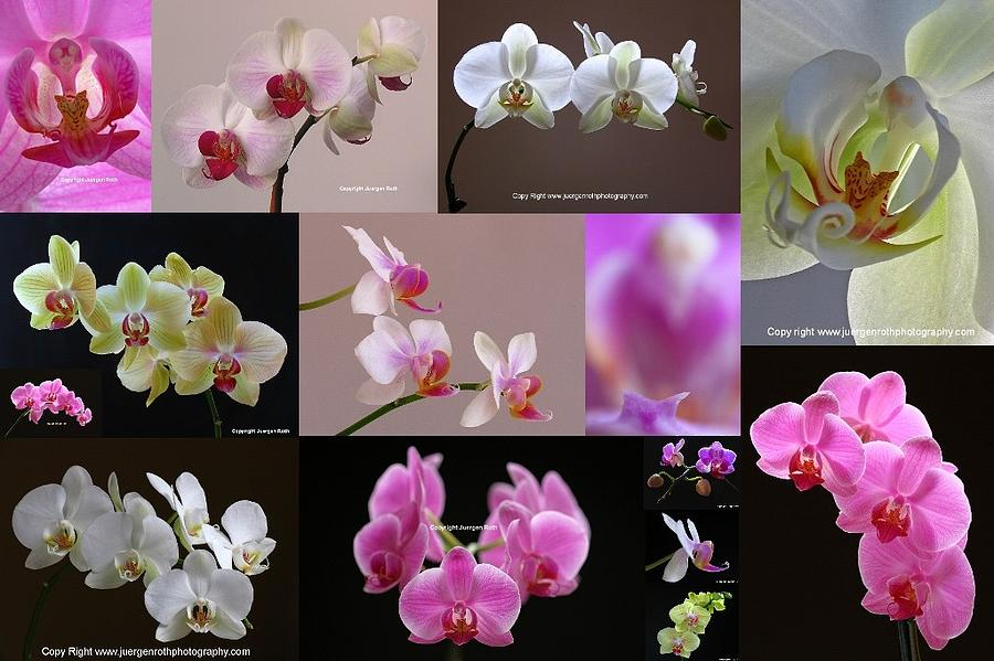 Orchid Photograph - Orchid Fine Art Flower Photography by Juergen Roth