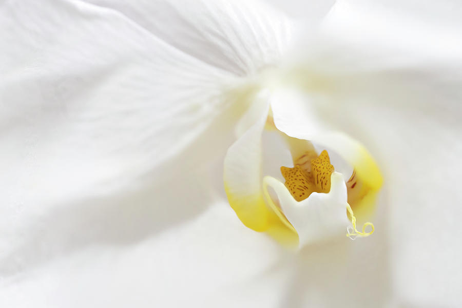 Orchid flower close up by Paul Cowan
