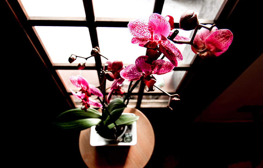 Beautiful Photograph - Orchid by Freepassenger By Ozzy CG