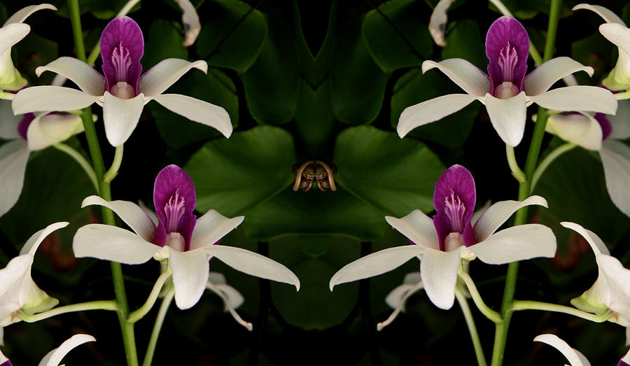 Orchid Gate by Bruce Richardson