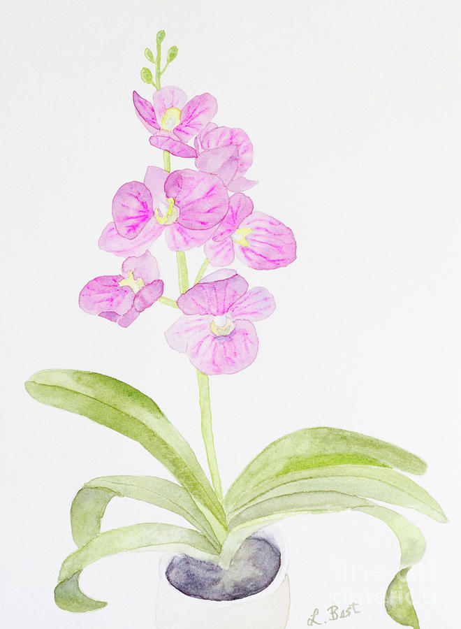 Orchid Painting - Orchid Gift by Laurel Best