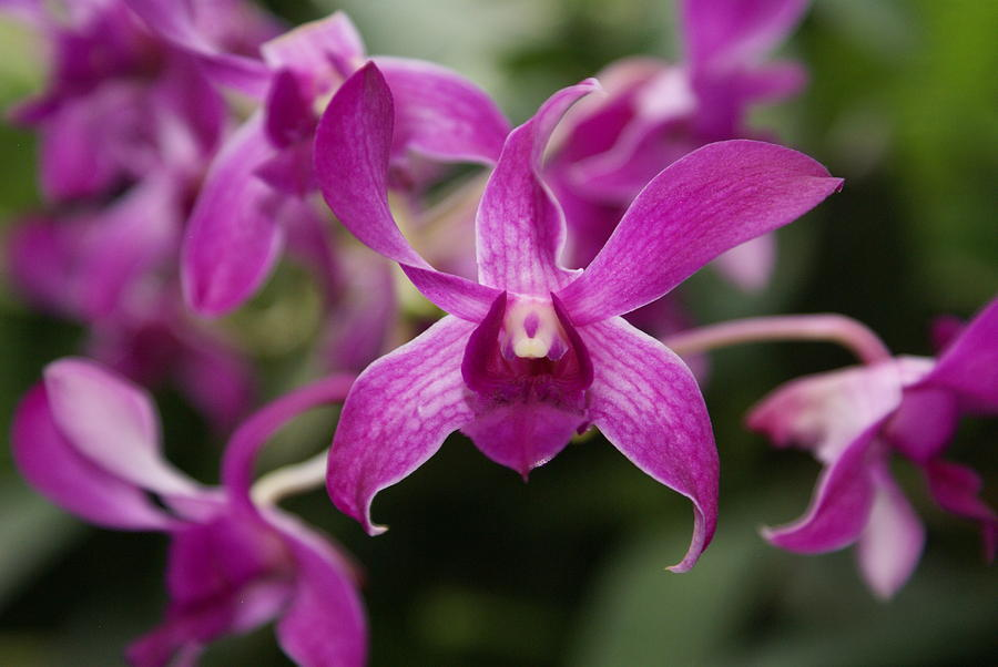 Orchid Photograph - Orchid by Heather Coen