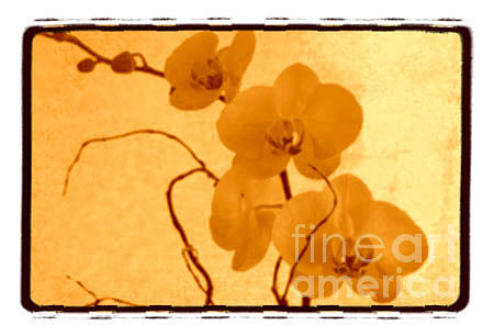 Orchid Photograph - Orchid in Bloom 1 by K Randall Wilcox